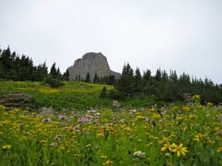 Glacier Mountain Flowers