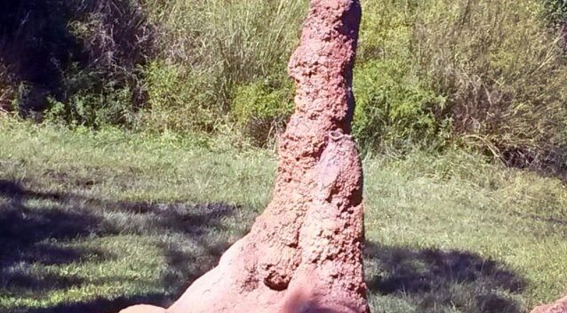 Termite hill from a real home inspection