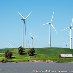 USA: California, Sherman Island, on north shore of Sacramento Delta, turbines of the Shilo Wind Power Plant in the Montezuma Hills