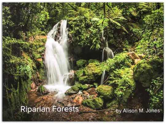 Riparian-Forests-1