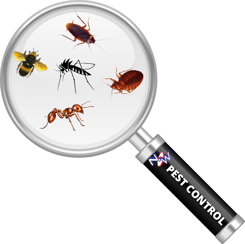 nw pest control