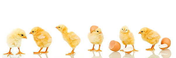 Don't count your chickens before they're hatched.