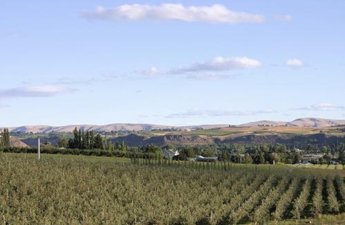 Yakima sunshine and orchards