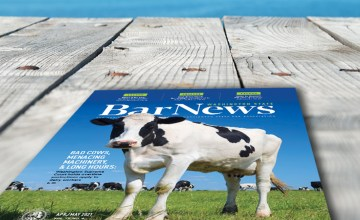 Cover of April/May 2021 Bar News depicting a cow