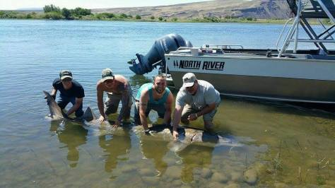 "RYAN ARMATROUT, TANNER ADLER, DOUG YOUNG AND STEVE MCPEAK HOLD RYAN'S STURGEON. IN OUR JUNE ISSUE, CONTRIBUTOR TODD MARTIN WROTE ABOUT THE IMPORTANCE OF KEEPING THE FISH IN THE WATER: ""RECENT INFORMATION HAS CREATED A BEST PRACTICES STANDARD TO FOLLOW. STURGEON OVER 5 FEET IN LENGTH ARE NOT TO BE LIFTED OUT OF THE WATER FOR HERO SHOTS. YOU CAN TAKE THEM TO SHORE, BEACH THEM AND TAKE YOUR PHOTOS, BUT THE HEAD OF THE STURGEON MUST NOT LEAVE THE WATER. IT WAS DISCOVERED THAT THE SENSITIVE INTERNAL ORGANS OF STURGEON WERE BEING UNINTENTIONALLY DAMAGED BY MISHANDLING BY ANGLERS LIFTING THEM UP FOR A PHOTO."" (DAIWA PHOTO CONTEST)"