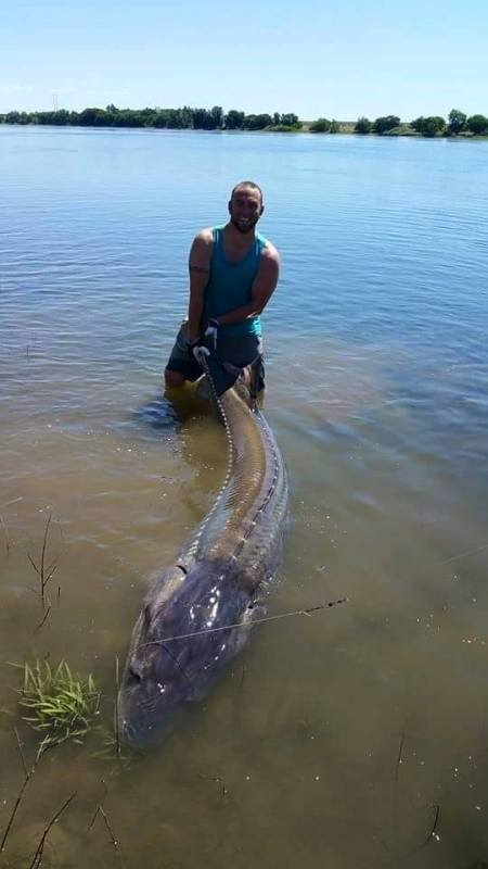 RYAN ARMATROUT HOLDS THE TAIL OF THE STURGEON HE HOOKED EARLIER THIS MONTH IN THE COLUMBIA'S HANFORD REACH. (DAIWA PHOTO CONTEST)