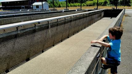 With Orcas In Mind, WA Salmon Hatchery Reform Policy Under Review
