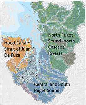 WDFW IS PLANNING TO SET ASIDE AT LEAST ONE RIVER IN THESE THREE REGIONS OF PUGET SOUND AS WILD STEELHEAD GENE BANKS. (WDFW)