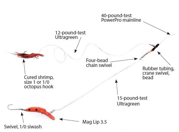 Cowlitz Salmon Steelhead Shotgun Rig
