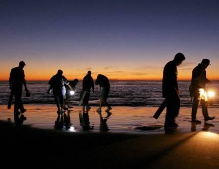 Razor Clam Digs OKed At Mocrocks, Copalis; Info Friday On Twin Harbors, Long Beach