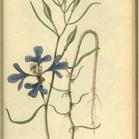Lewis & Clark flora page