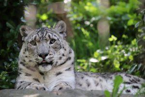 【見所いっぱい】セントラルパーク動物園:勝手に可愛い動物ランキング(Central Park Zoo)