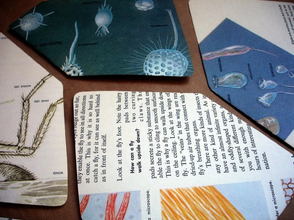 Handmade Stationery Set- Vintage 1961 The How and Why Wonder of the Microscope 4bar Stationery Set- Envelopes and Cards
