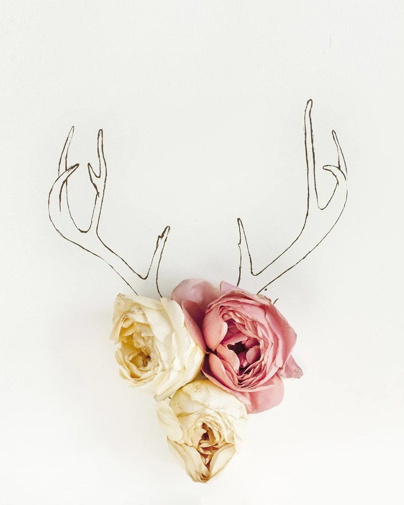 Antler drawing and flower photograph 4217