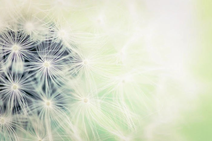 Make a wish, a fine art nature photography print on Etsy