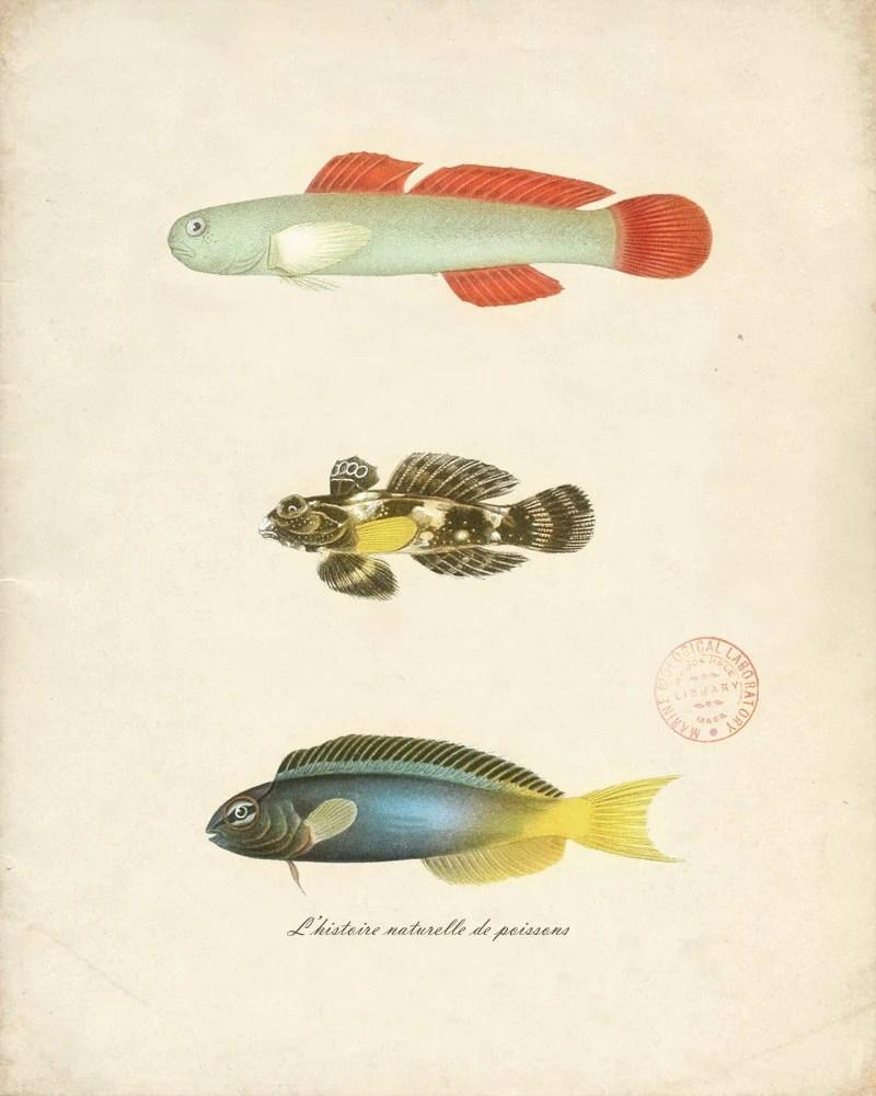 Le Histoire Naturelle de Poissons Print No 2 8x10