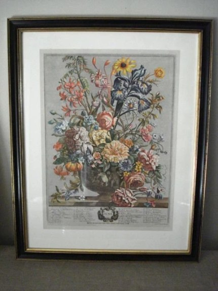 Vintage Framed Botanical Print Set