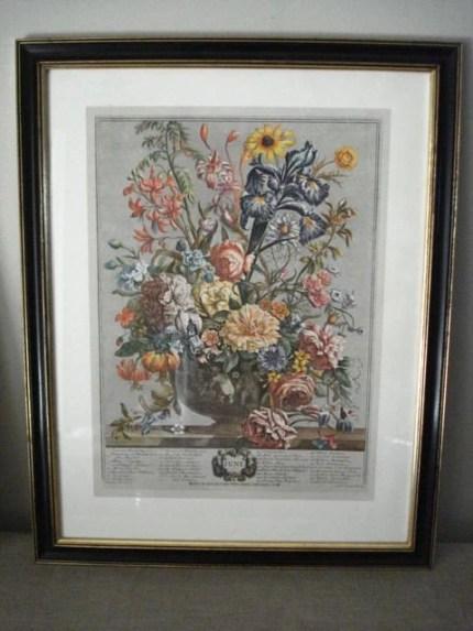 Vintage Framed Botanical Print Set