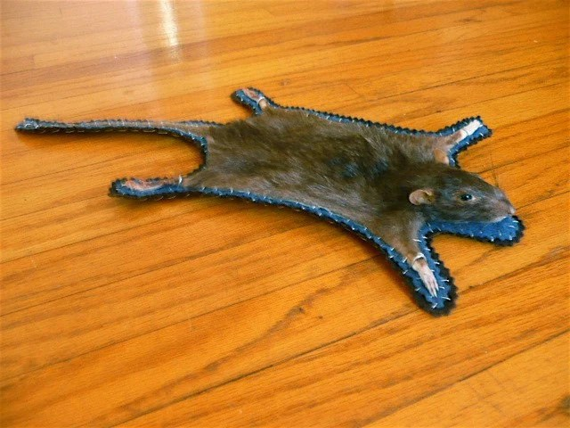 TAXIDERMY rat skin rug UNIQUE
