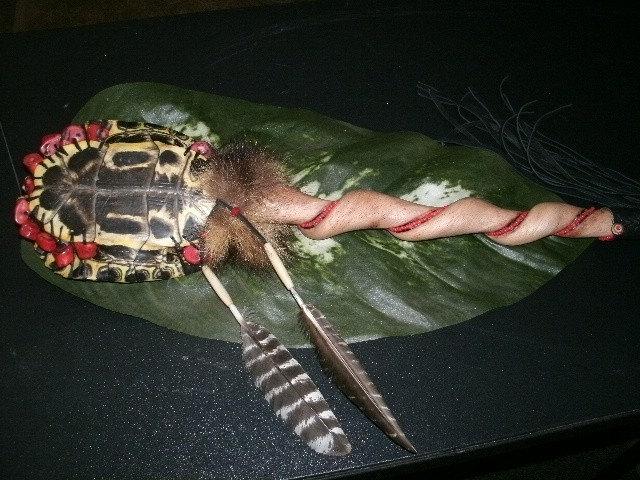 Turtle Shell Rattle - Red Backbone