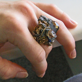 Microcosmic  Milieu Ring
