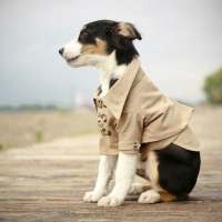 My Dog Blog: Dog Clothes Make Cute Gift Ideas for Your Pet