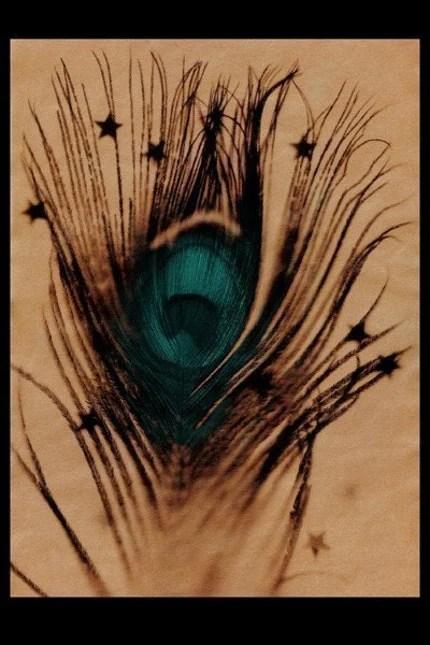 Peacock photogram by Heidi Burton