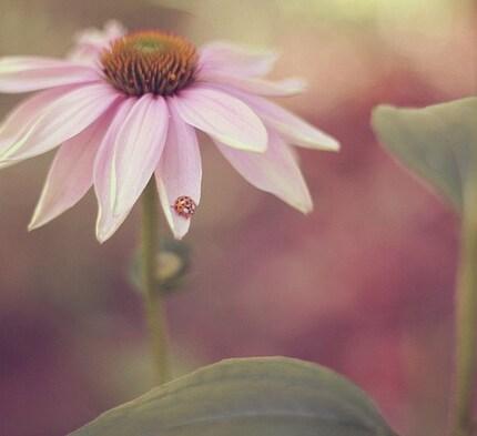 Ladybug Love (5 by 5 Fine Art Photograph)