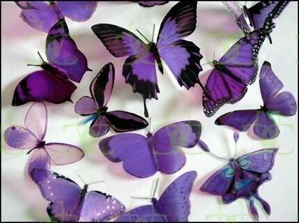 Mixed Purple Butterflies