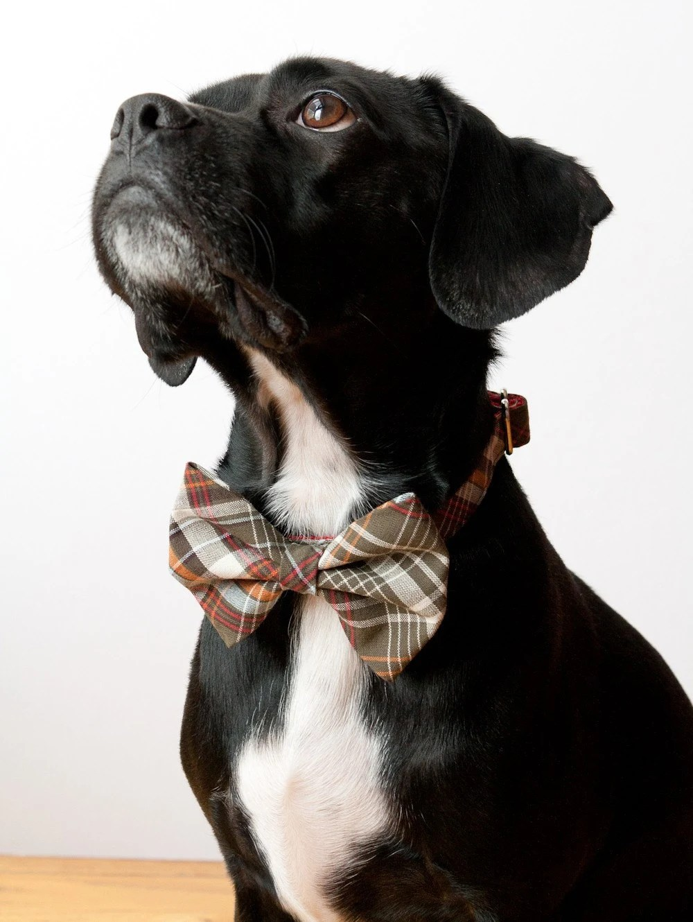 Olive Tartan Bow Tie Dog Collar