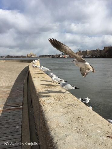 Roosevelt Island birds