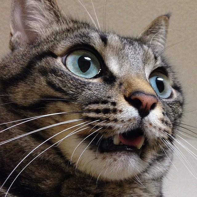 留守中に旦那がチョコちゃんという子猫を拾っていてびっくりして目が覚めましたΣ(Д)みゅ〜くんもびっくりな夢を見ましたよ〜笑そんな今日はプランタン銀座ねこ展4日目です!どうぞよろしくお願いしま〜す꒰⌯͒•ɷ•⌯͒꒱ฅニャ