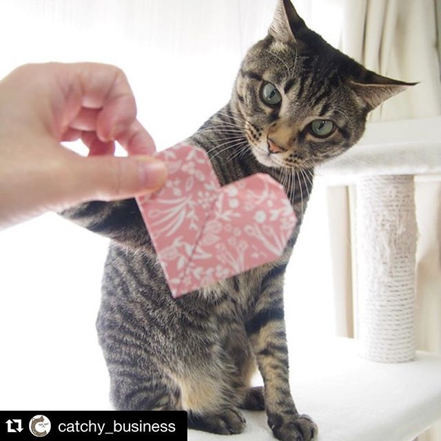 #Repost @catchy_business with @repostapp.・・・Give me that, Mom! Your love is all mine!! それちょ~だい♪ おかーしゃんのLOVEは全部ボクのものだよ#cat#neko#catsofinstagram#キジトラ#サバトラ