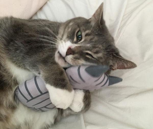 Monty-the-cat