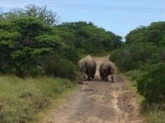 Rhino Inkwenkwezi