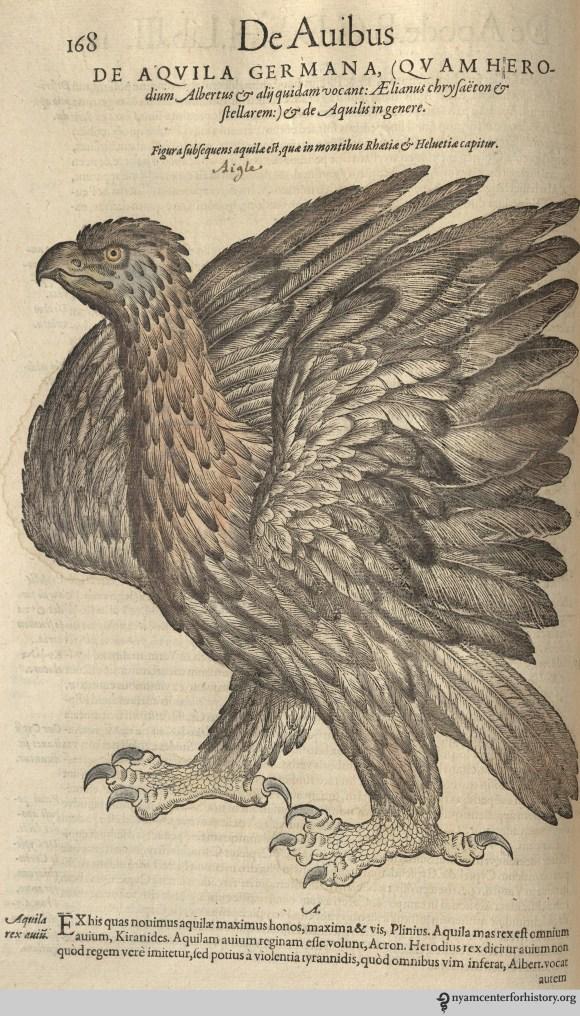 Eagle from Gesner's Historia Animalium, Liber III.