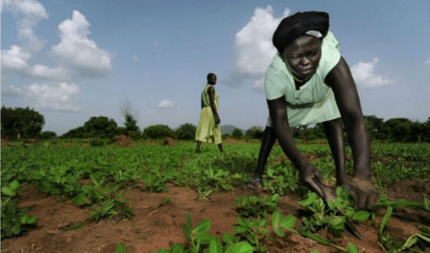 Women farming in Eastern Equatoria, South Sudan (Photo: Peter Biro/IRC)