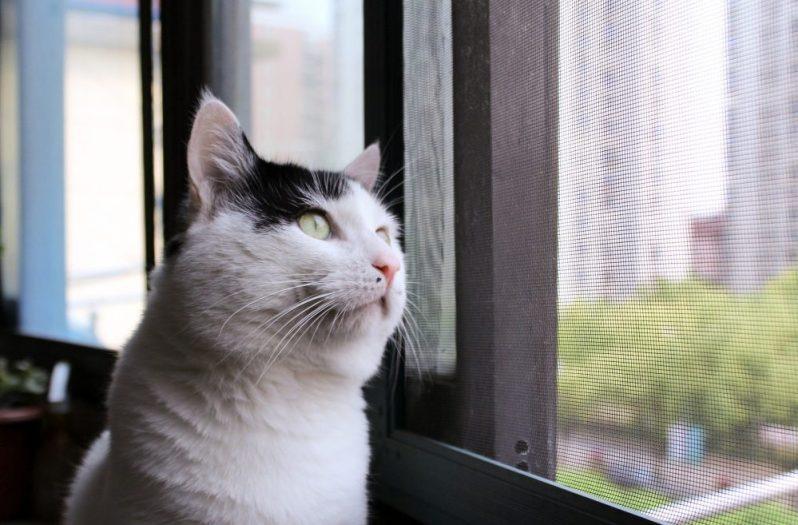 尊敬できる人と働くための方法を考える猫