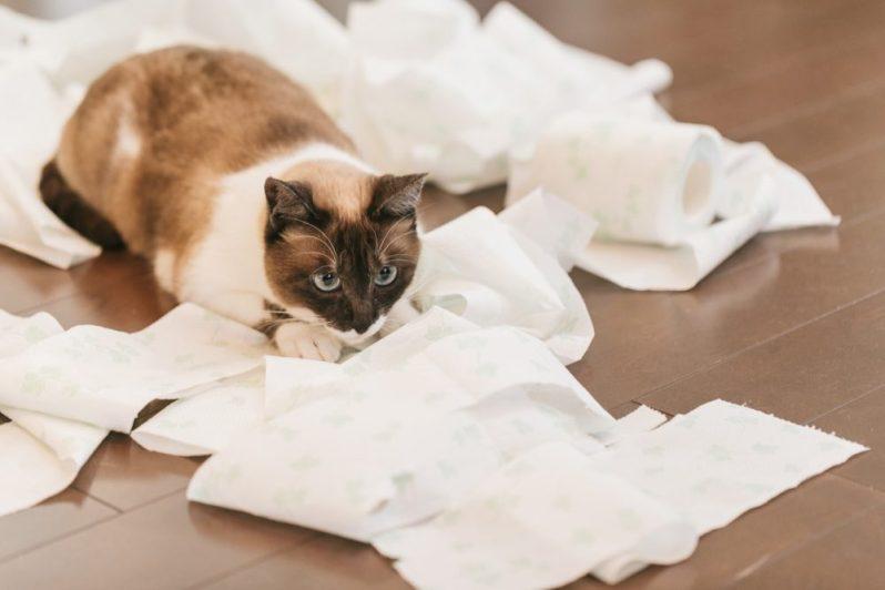 就活メールのマナーを知らない猫