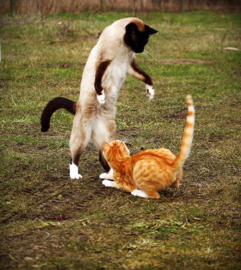 成長できる福利厚生制度を利用して強くなった猫