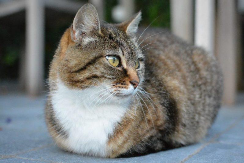 セカンドベストのシナリオを聞いている猫