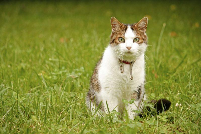 アグリテックに勤しむ猫