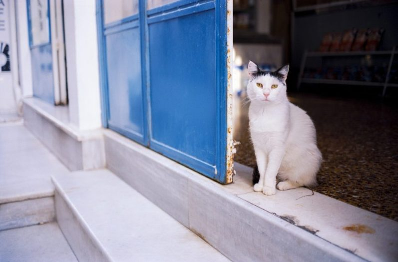 就活塾に通う猫