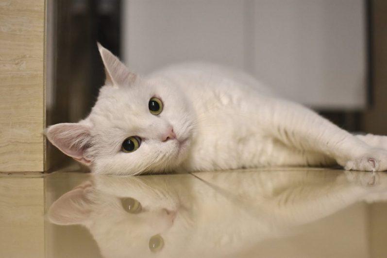 福利厚生制度を活用して休暇を取る猫