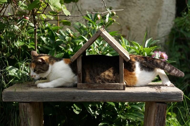 福利厚生制度で住宅補助を受ける猫