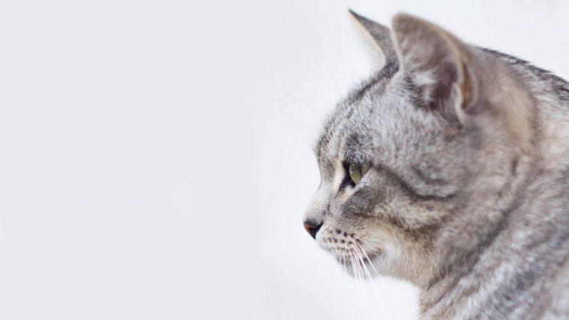 志望動機の書き方と伝え方を学ぶ猫
