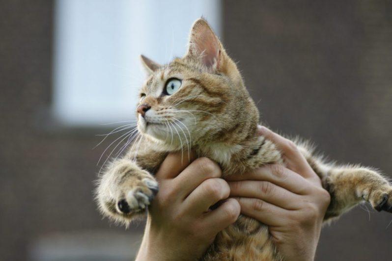 就活中に異性との別れを告げられる猫