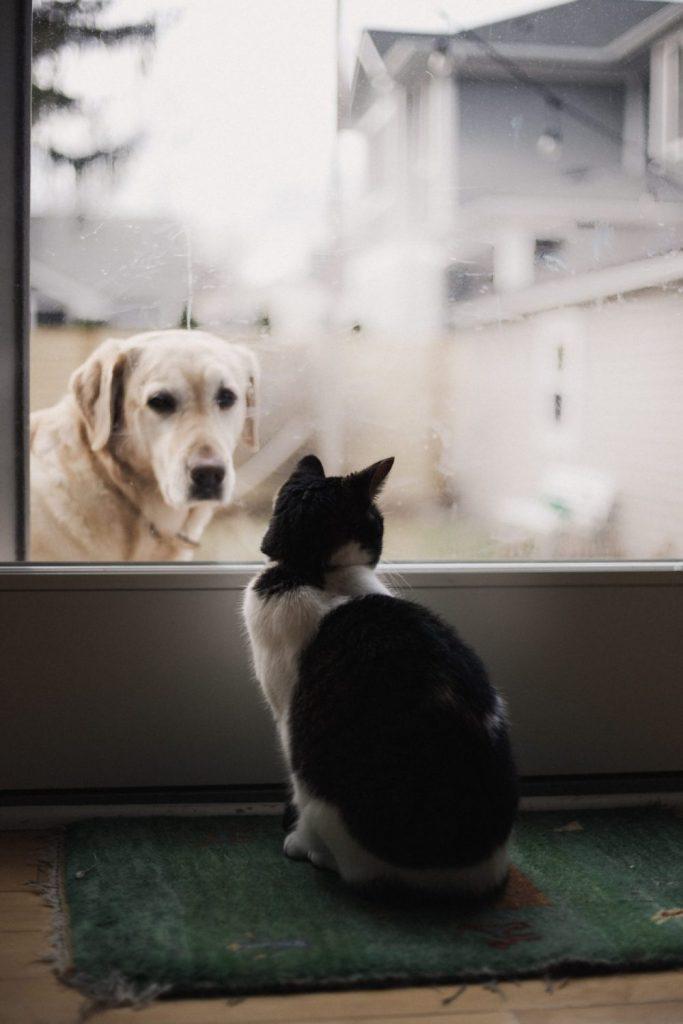 オオカミの入室を防ぐ内定者の猫