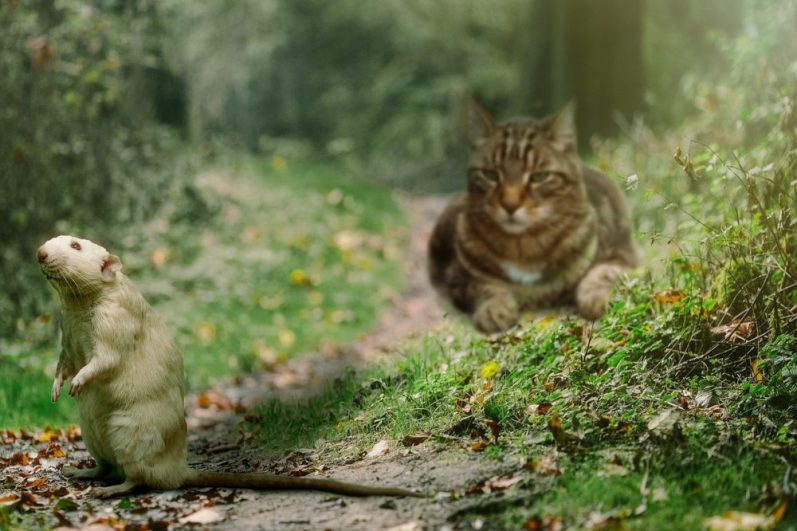グローバルに活躍したいねずみの相談に付き合う猫