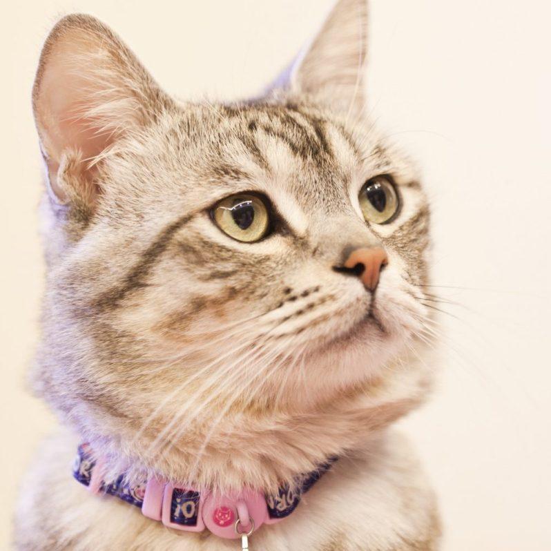やりがいから自己分析をする方法があったことを知った瞬間の猫